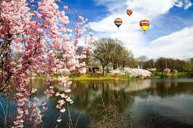 cherry blossoms images the ten best things you can do in april in new jersey
