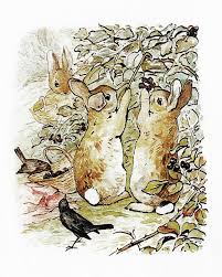 rabbit by beatrix potter 677 best beatrix potter images on beatrice potter