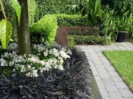 grass garden design amazing ornamental grasses plan 15 gingembre co