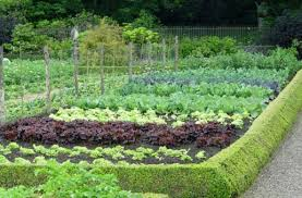 Creative Vegetable Gardens by The Gardening Everyday Gardening As A Hobby