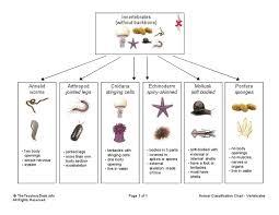 animal classification chart invertebrates