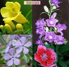 plants for your garden garden plants choose plants for garden