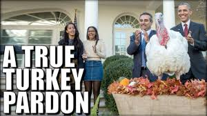thanksgiving turkey pardon hey obama here u0027s how you really pardon a turkey youtube