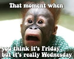 Wednesday Hump Day Meme - its only wednesday quotes quote days of the week wednesday hump