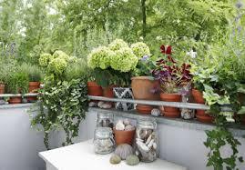 balkon grã npflanzen balkonpflanzen balkone infos de