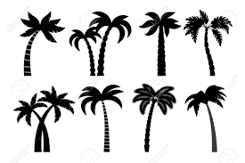 palm tree black set vector drawing palma trees silhouettes