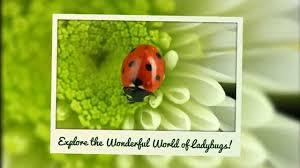 ladybug world ladybug kids books on amazon youtube