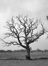 dead tree drawings cerca con arboles secos