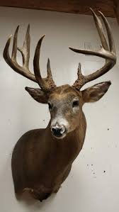 fish wall mounts 362 best trophy room images on pinterest trophy rooms taxidermy