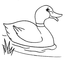 coloring page coloring pages duck 004 free easter page coloring