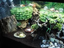 the ideal crabitat logan u0027s hermit crab pinterest hermit crab