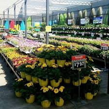 Flowers Paducah Ky - flowers paducah ky flowers ideas