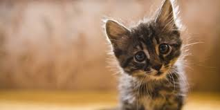 11 reasons your crazy cat obsession makes you happier and