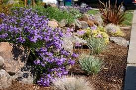 Low Maintenance Garden Ideas Low Maintenance Gardens Ideas Garden Designs Reviews Design And