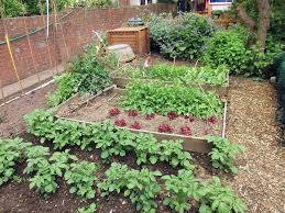 Growing Your Own Vegetable Garden by How To Start Your Own Vegetable Garden Opinion Resources