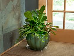 Plant Combination Ideas For Container Gardens Create A Houseplant Container Garden Bayer Advanced