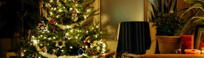 tips for caring for your christmas tree tree classics blog