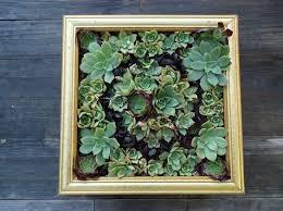 best 25 succulent frame ideas on pinterest succulent wall