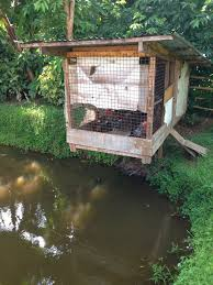 Chicken Home Decor by Chicken Coops That Work 5 Brilliant Ways Abundant Permaculture
