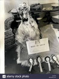 boxer dog crufts 2015 crufts dog show stock photos u0026 crufts dog show stock images alamy