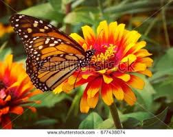 butterfly flower stock images royalty free images vectors