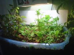 what is aquaponics and how to build a micro aquaponics system for