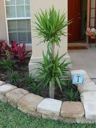 Backyard Trees Landscaping Ideas 26 Small Palm Trees Gardening Ideas For Your Backyard Dlingoo