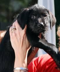 animal rescue league of boston