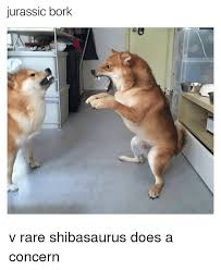 Rare Memes - jurassic bork v rare shibasaurus does a concern meme on esmemes com