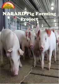 nabardpigfarmingproject 150228091418 conversion gate01 thumbnail 4 jpg cb u003d1475593942