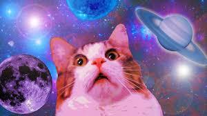 Cats Meme - 11 min of dank cat memes youtube