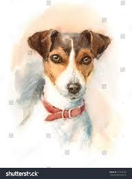 australian shepherd jack russell terrier watercolor dog jack russell terrier portrait stock illustration