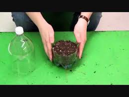 how to build a pop bottle terrarium youtube