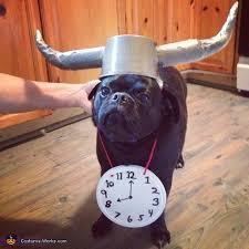 in costumes 240 best pet costumes images on animals animal
