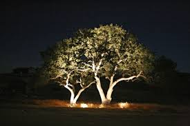 120 Volt Landscape Lighting by Landscape Tree Lighting Landscape Lighting Ideas
