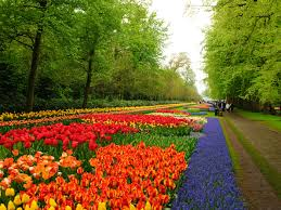 flower gardens pictures niederlande keukenhof flower garden