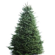 lowes trees with multicolor lights tag 53
