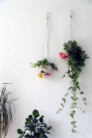 59 best indoor plants images on pinterest plants indoor plants