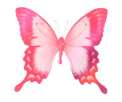 pink butterfly drawing by aira maeda on deviantart