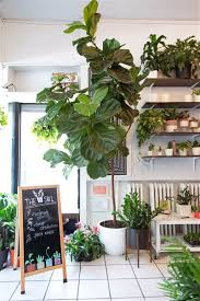 best house plants best indoor office trees archives lime garden