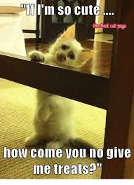 Cute No Meme - n so cute the best cat page how cone you no give me treats cute