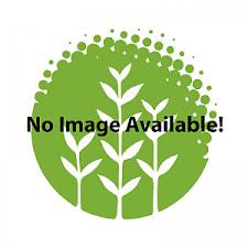 plant database barr report forum aquarium plants