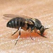 target black friday 2016 hours spokane wa black fly bites vs target lesions southcare animal medical center