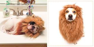 Doggy Halloween Costumes 29 Dog Costumes Halloween 2017 Cute Halloween Costumes