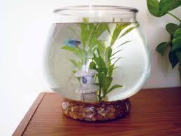 Beta Fish In Vase Green Jean Betta Fish