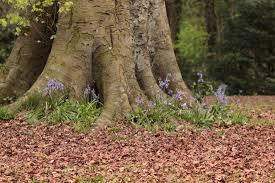 native irish plants irish wildlife home