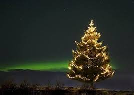 buy iceland christmas tree decorated with lights with northern