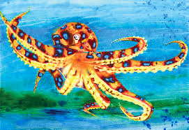 Octopus Home Blue Ringed Octopus Painting By Peter James Wilson On Deviantart