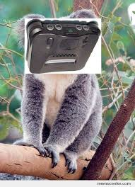 Koala Bear Meme - n64 koala bear by ben meme center