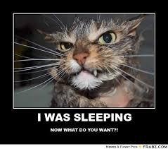 Sleeping In Meme - i was sleeping meme generator posterizer